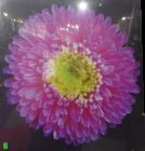Pink Flower Wall Art